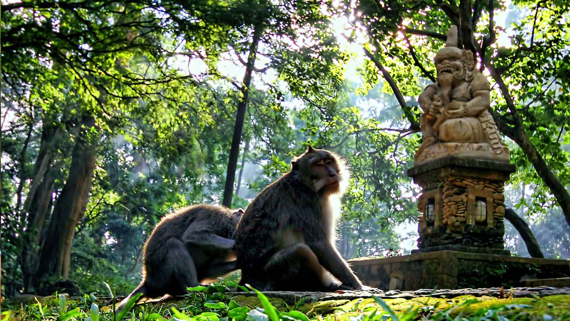 Encounters With Nature At The Sacred Monkey Forest