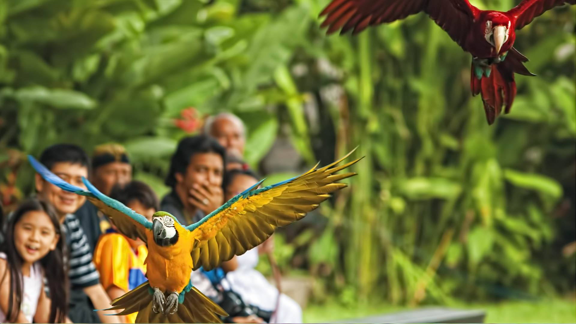 The Amazing Bali Bird Park