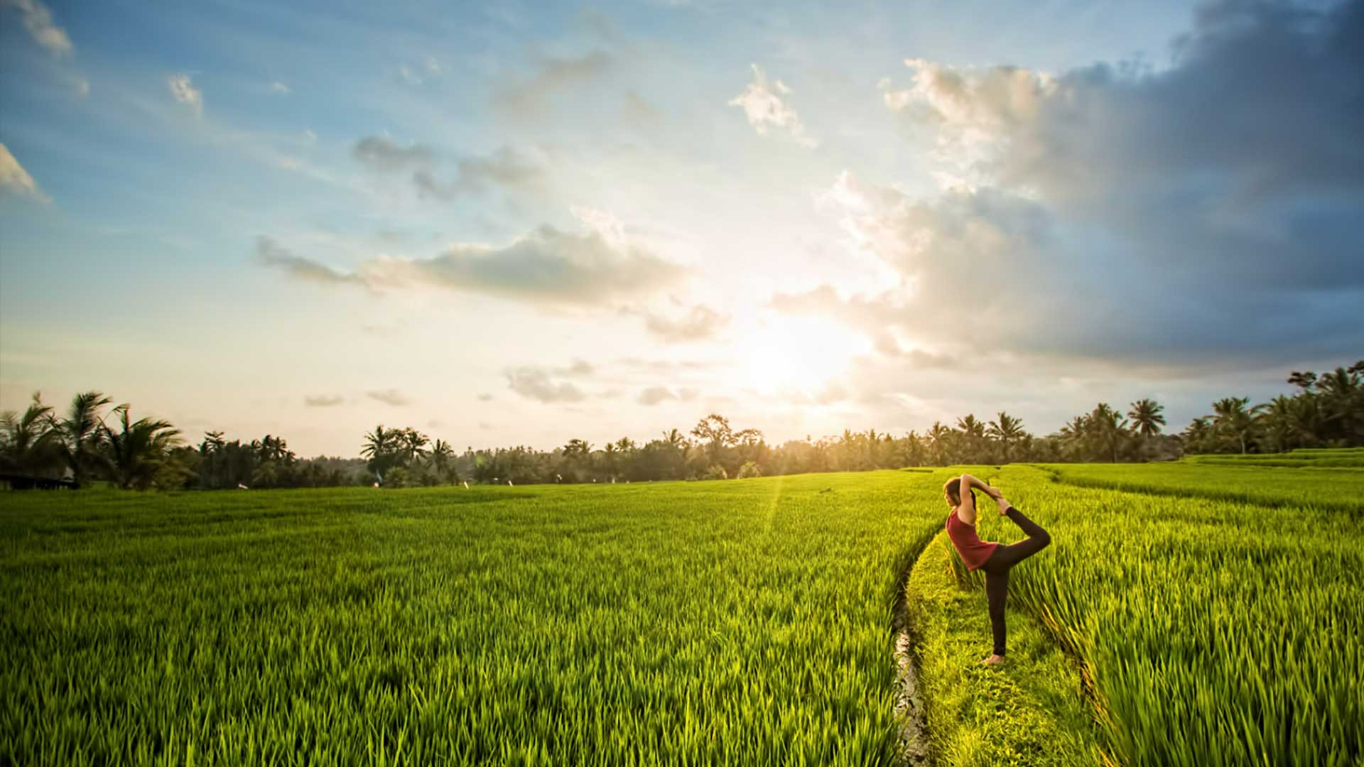 Yoga In The Ricefields